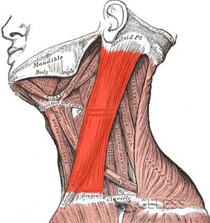 Упражнение для растяжения боковых мышц шеи - Эрик Франклин