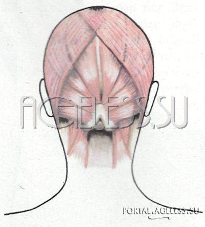 сента мария рунге подтяжка лица с помощью упражнений скачать