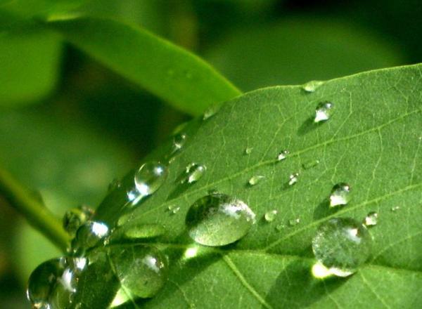 Очищение организма – основные рекомендации и советы