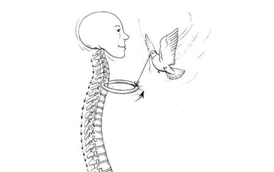 Первые ребра: крыша грудной клетки - Эрик Франклин