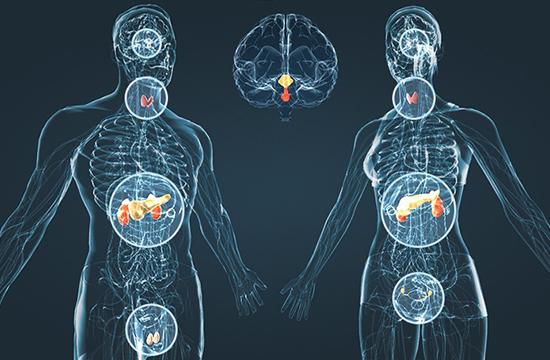 25 упражнений для эндокринной системы